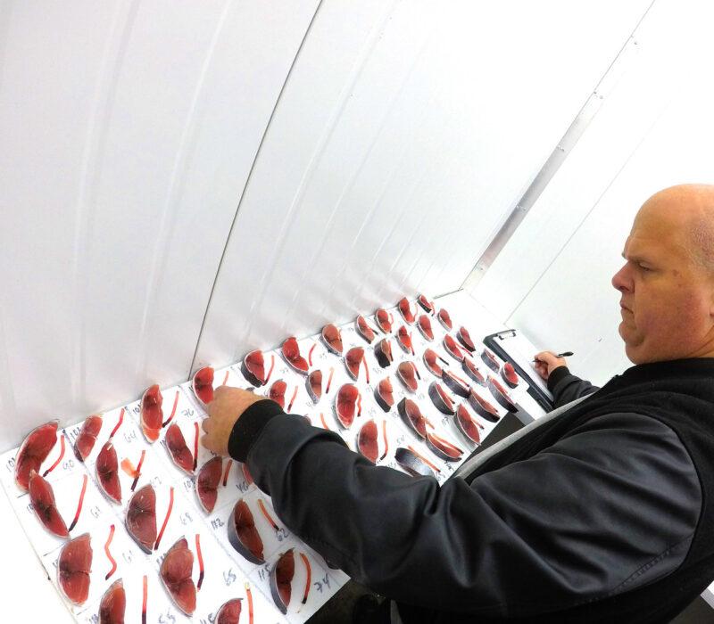 Chris Wheeler Grading Tuna
