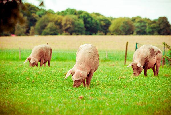 True Grade Pork Products