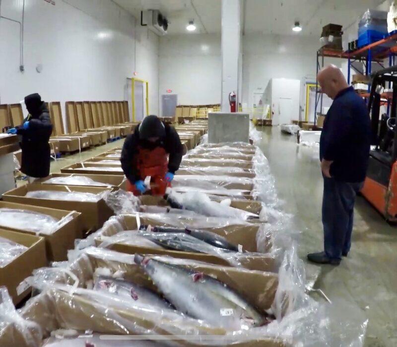 True Grade Tuna Inspection